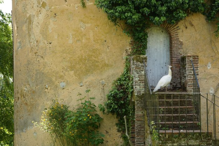 Pigeonnier Paon
